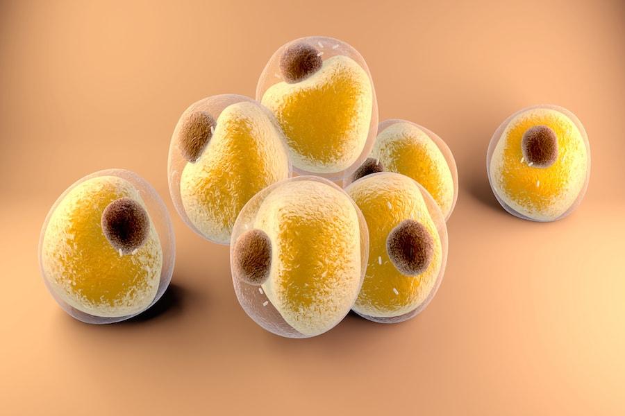 3D animated fat cells | DNAfit Blog