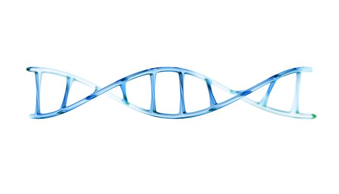3D fragment of human DNA molecule | DNAfit Blog